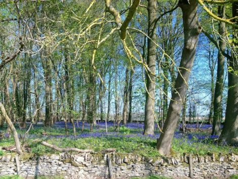 Easter Day Bluebellls