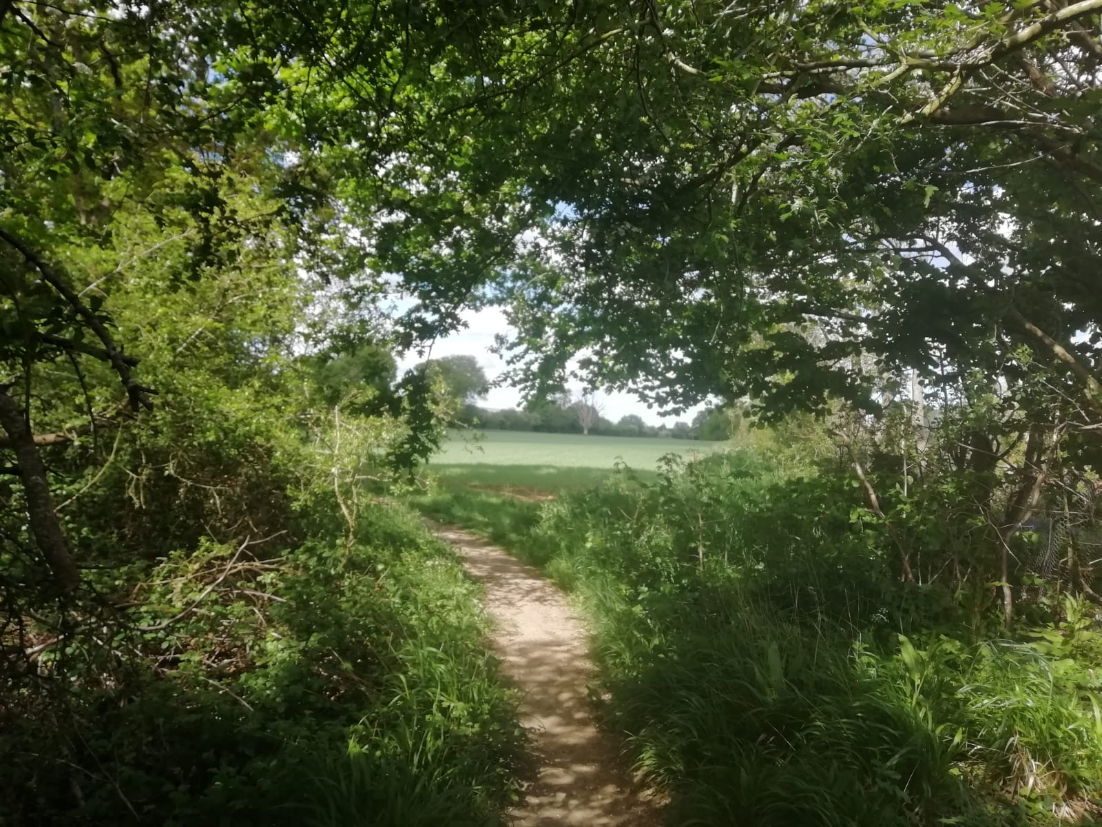 a path