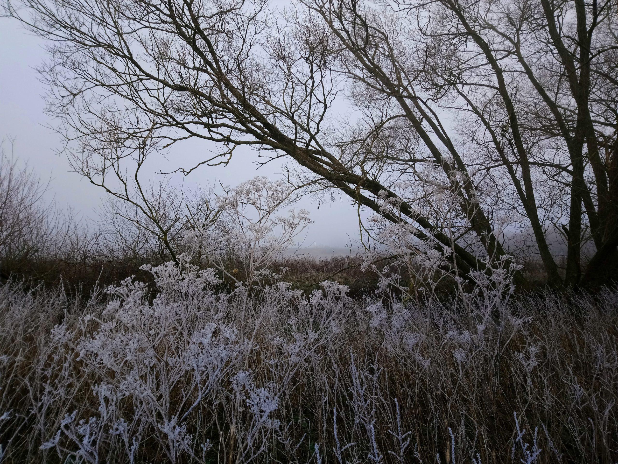 frosty wychwoods