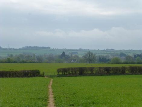 local fields